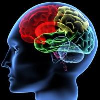 Kad ljudima stane mozak :)