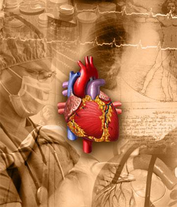 srce, ljudi kriju istinu