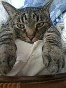 mačka Zeka