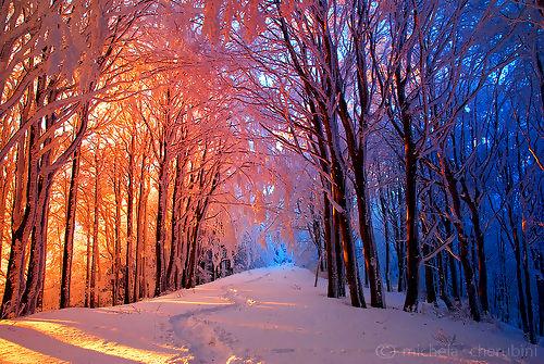 šuma pod snegom