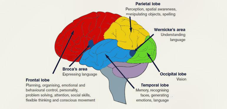 mozak emocije amygdala hijack